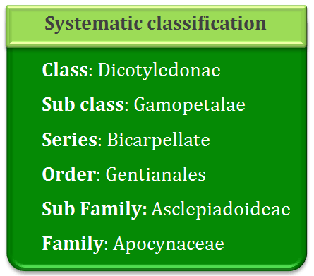 Systematic classification of asclepiadaceae, gamopetalae, bicarpellate, gentianales, apocyanaceae