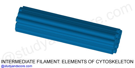 intermediate filaments, cytoskeleton, structure and function, organelles, microtubules, actin filaments