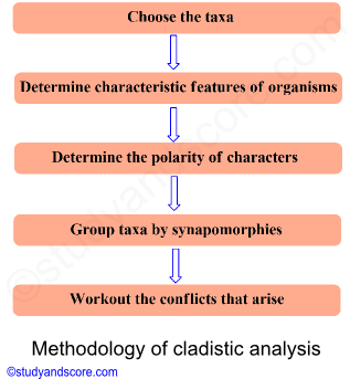 methodology of cladistic analysis, choose taxa, determine characteristic