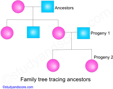 family tree tracing ancestors, cladistics