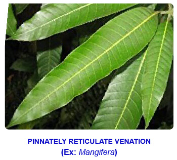 NCERT notes, free, CBSE notes, Leaf, Characteristics of leaf, functions of leaf, modifications of leaf, phyllotaxy, Venation, tendrils, spines, trap leaves, reproductive leaves