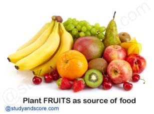 plants fruits as a source of food,Apple, Banana, Tomato, Grapes