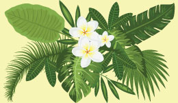 Life Sciences botany, Study of plants, angiosperms, cryptogams, phanerogams, angiospermic families, plant classfication, free notes